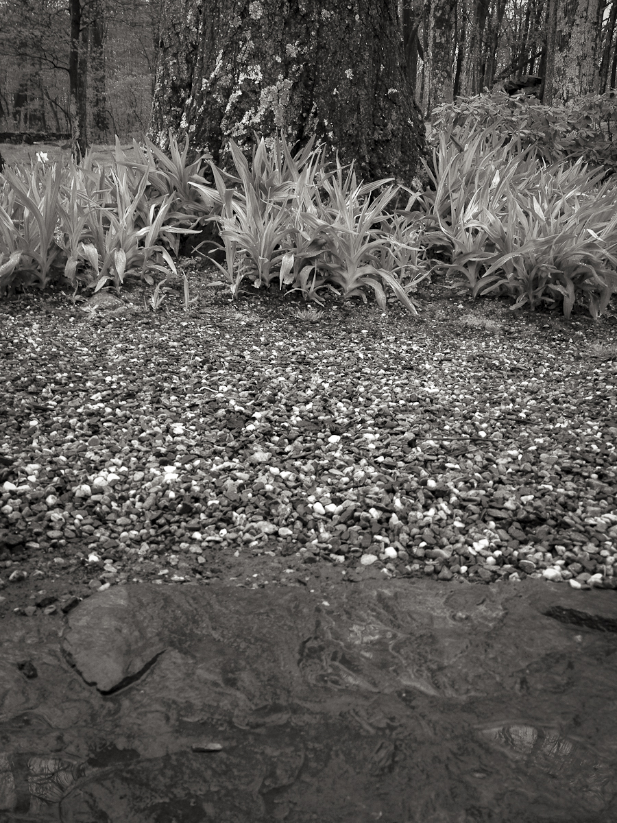 Pebbles, leaves and trees