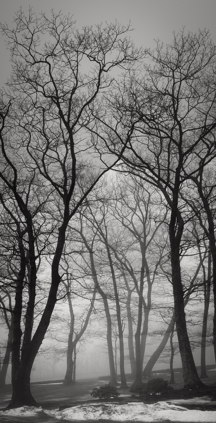 Trees, Warren